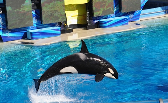 seaworld-san-diego-california