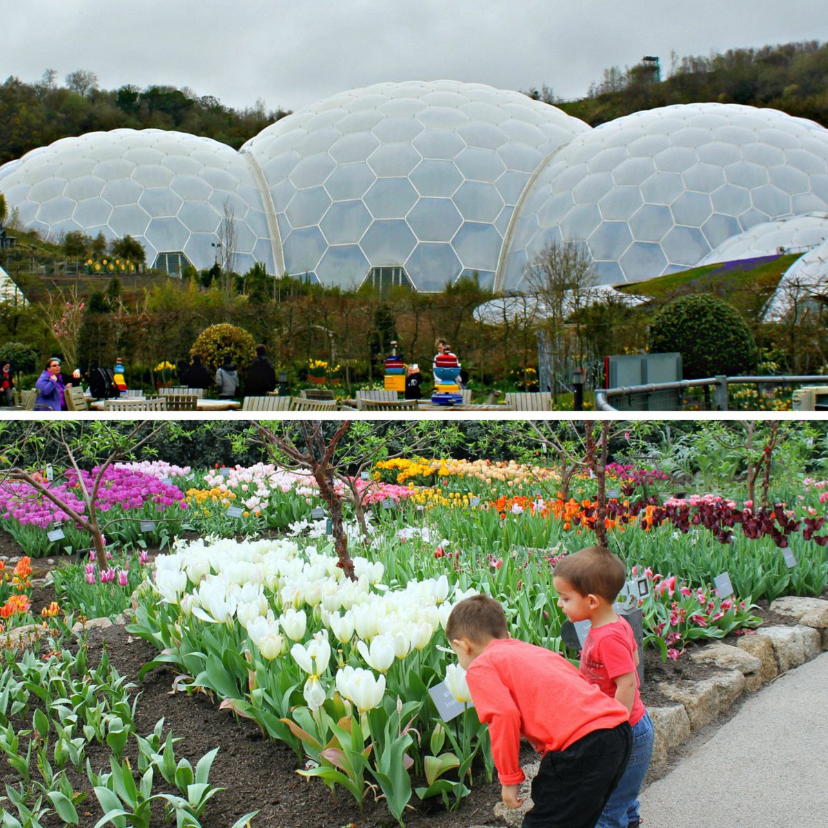 Eden Project Cornwall collage