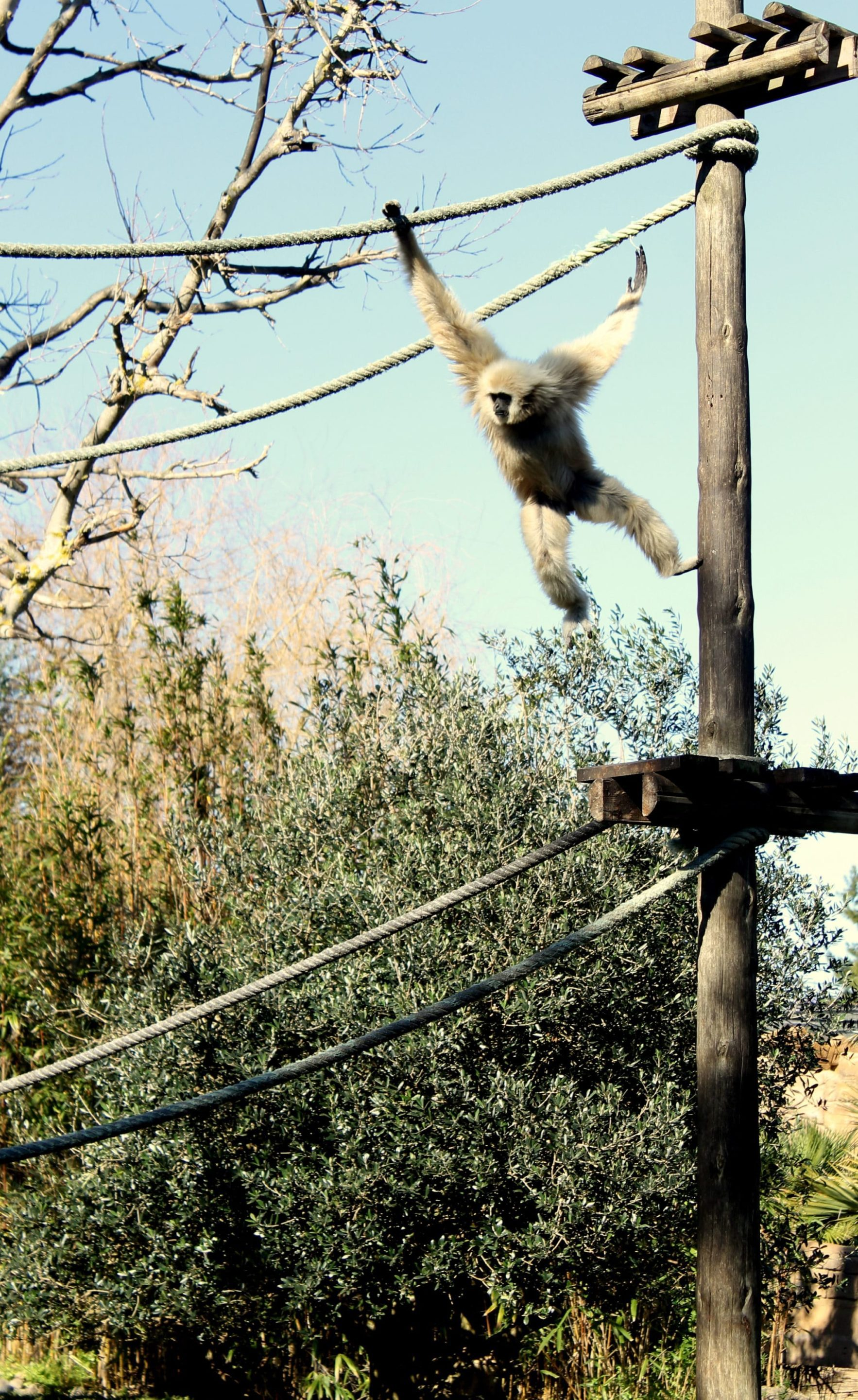 Children of all ages will be delighted by the active monkeys at Zoo de Lagos.